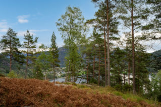 Se Erfjord, gnr 148 bnr 28, 4233 SULDAL bilde 10